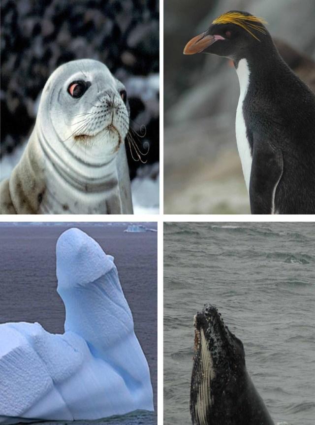 Sälar, pingviner, fascinerande (!) isbergsformationer och valar
