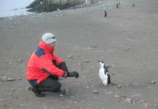 Jag själv med en hakrem-pingvin (Pygoscelis antarctica)