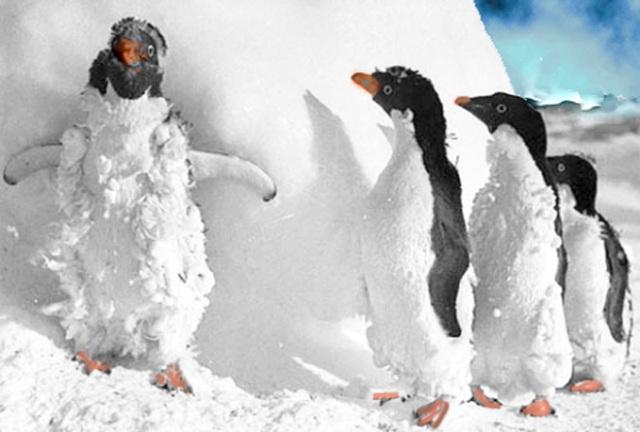 Till och med Antarktis invånare kan få nog av vädret