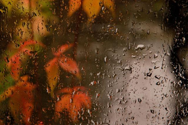 regnlöv