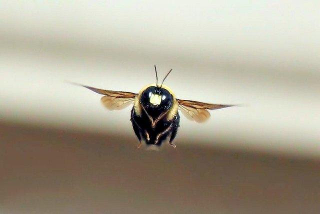 Kan flyga