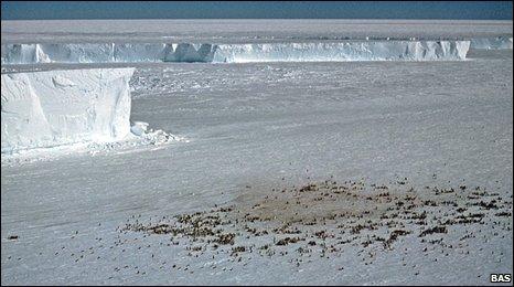 Kejsarpingvinerna syns inte från rymden, men deras bajs gör det.
