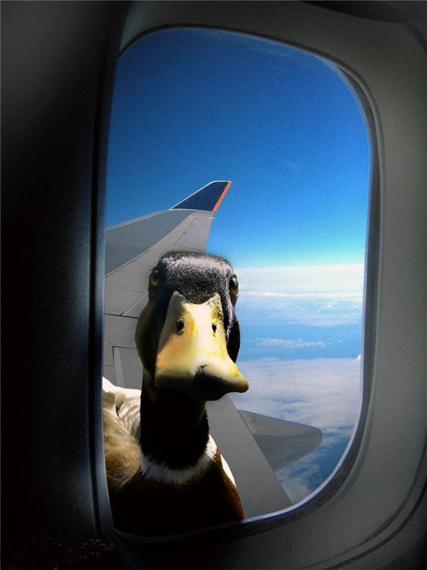 Hellre ankor än flygning