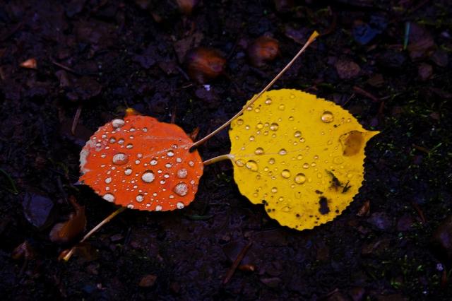 Vad gör vi med hösten?