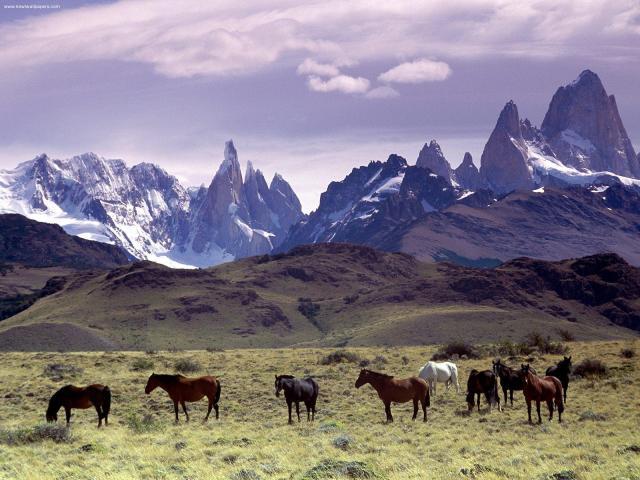 Patagonien, ett unikt landskap
